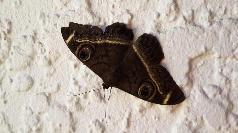 get rid of moths in the home